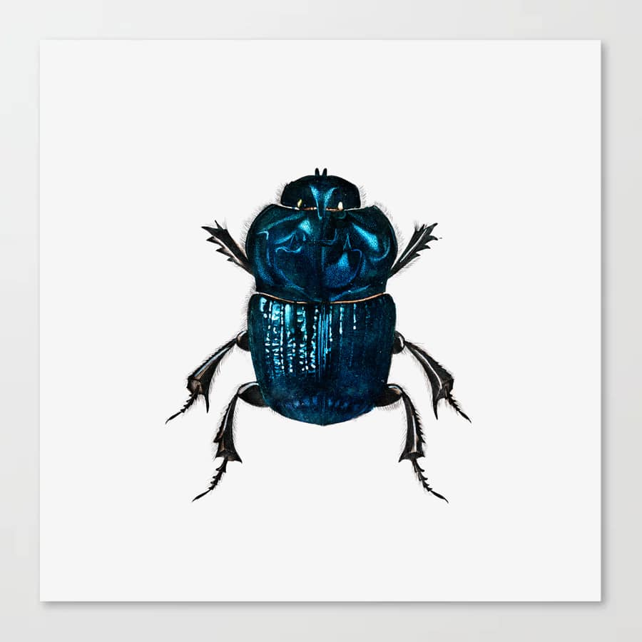 Beetle Illustration Drawing Blue Black Minimal Design Canvas Print