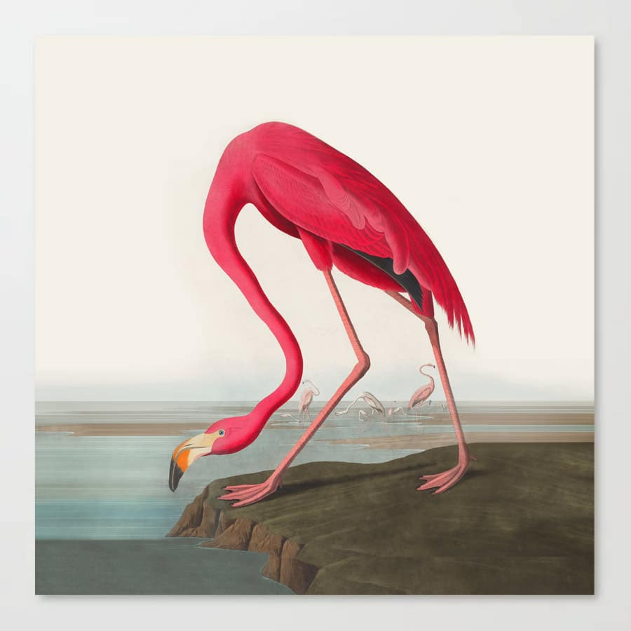 Fuchsia Flamingo Audobon Painting Canvas Print