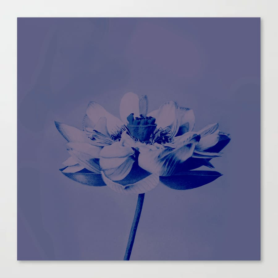 Lotus Flower Blue Canvas Print