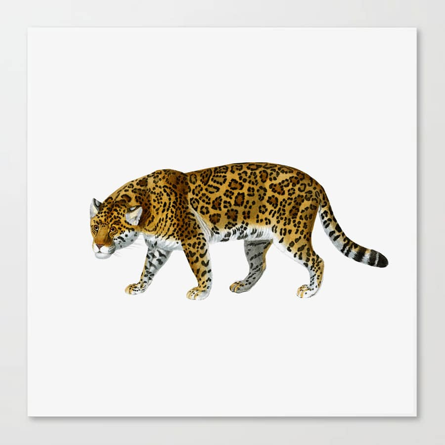 Jaguar Wild Cat Canvas Print